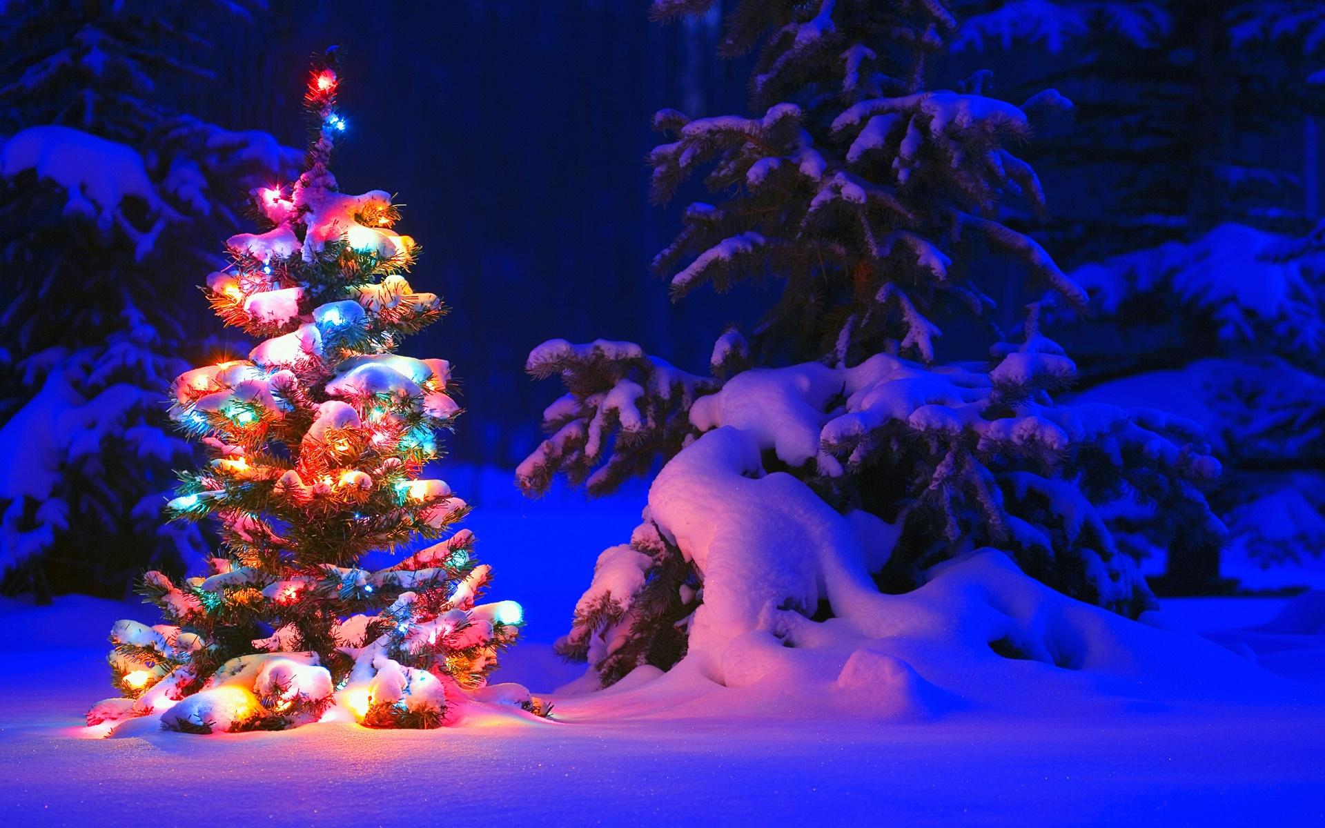 Schnee, Leuchten, Baum, Winter, Nacht, Weihnachten Desktop ...