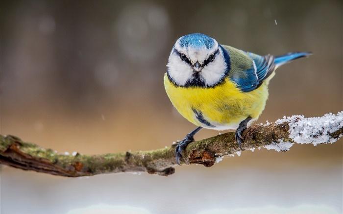 weisser vogel mit federn