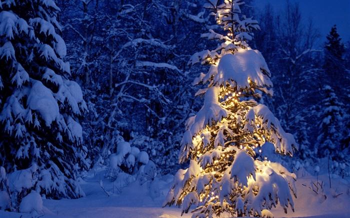Weihnachten Hd Bilder.Nacht Bäume Lichter Dicken Schnee Weihnachten Hd